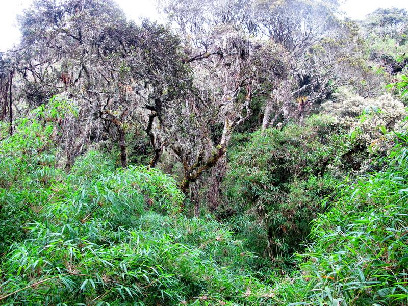 Bosque húmedo de Guatavita