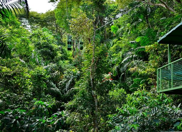 Selva en Gamboa desde el teleférico