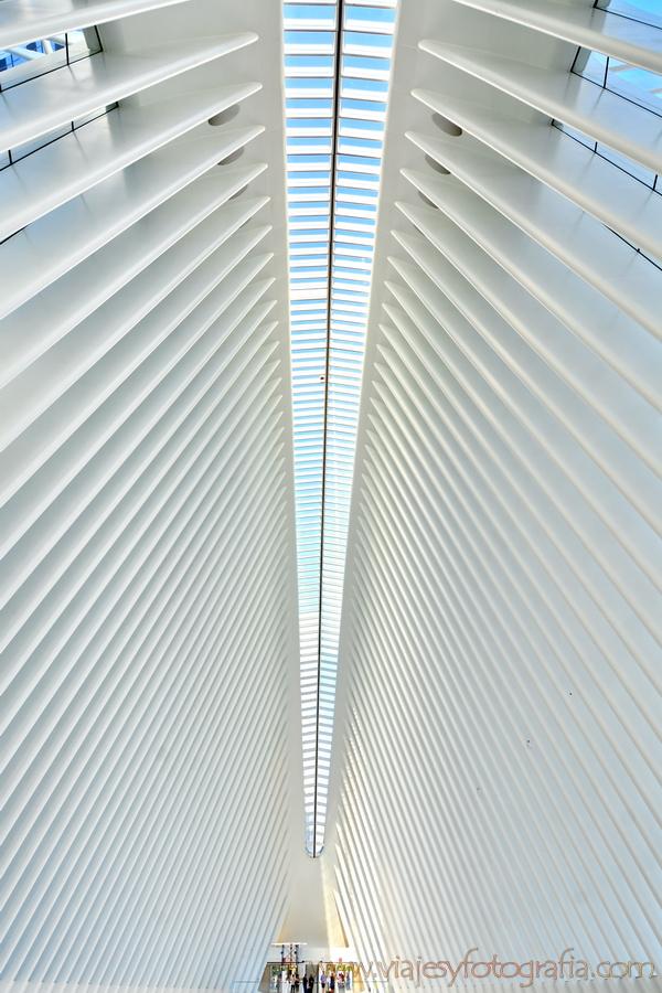 oculus_6036