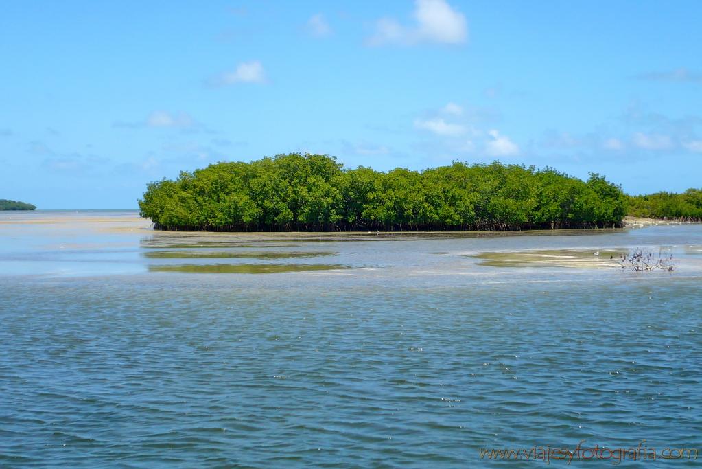 Cayos de Florida manglares
